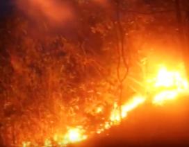 10 ha rừng bị thiêu rụi trong 26 tiếng: Nghi do đốt ong lấy mật