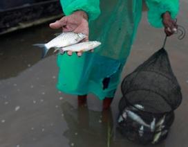 Những con đập của Trung Quốc và cuộc khủng hoảng trên dòng Mekong