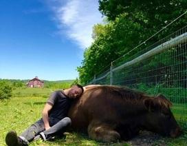Bỏ ra 1,7 triệu để… ôm bò trong một tiếng
