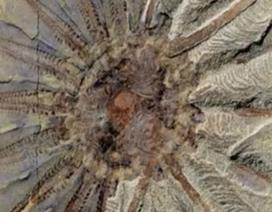 Bí ẩn sinh vật biển 518 triệu năm tuổi mới tìm thấy ở Trung Quốc