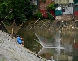 Hà Nội: Cất lưới, buông cần câu cá trên sông Kim Ngưu sau mưa lớn
