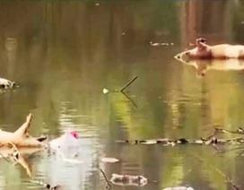 Sông Đào ô nhiễm, chủ tịch tỉnh truy trách nhiệm nhà máy nước