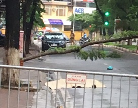 Hà Nội: Người đàn ông tử vong cạnh một cây xanh đổ chắn ngang đường