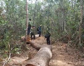 Xã nghèo để mất hơn 850ha rừng, trục lợi ngân sách hơn 900 triệu đồng