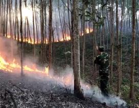 Khởi tố người đàn ông vô tình gây ra vụ cháy rừng thiệt hại 149,6ha