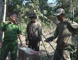 Tạm giữ 4 người chuyên khai thác gỗ rừng trái phép
