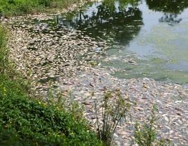 Nước bẩn từ nội thành Hà Nội đổ về khiến cá hồ Yên Sở chết