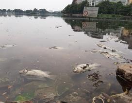 Hà Nội: Cá chết hàng loạt bốc mùi hôi thối trên hồ Trúc Bạch