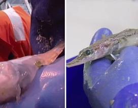 Phát hiện những sinh vật kỳ dị chưa từng thấy dưới biển Nam Cực
