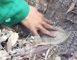 Cà Mau phân công đơn vị chịu trách nhiệm xử lý khi có xác thai nhi trong rác