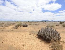 Các loài thực vật đang suy giảm nhanh hơn 350  lần so với lịch sử Trái Đất