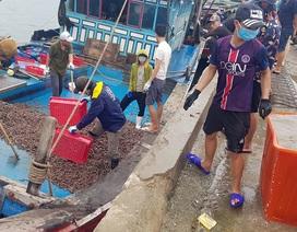 Ngư dân trúng đậm ốc xoắn và sò bi, đút túi hàng triệu đồng/chuyến ra biển