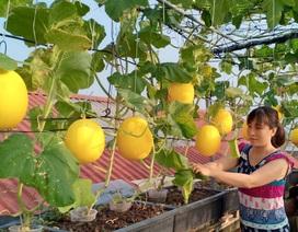 """Vườn dưa sai trĩu quả, """"đếm mỏi tay"""" trên sân thượng của mẹ đảm Hà Nội"""