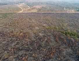 Rừng Amazon đang cháy và 5 điều cần biết