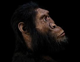 Gương mặt của tổ tiên xa xưa nhất của loài người được tiết lộ