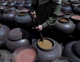 Những hình ảnh về nghề làm tương bần ở tỉnh Hưng Yên