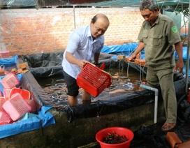 Phát hiện một cơ sở nuôi hơn 7.000 con tôm hùm đỏ