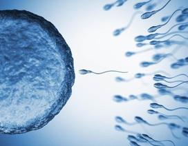 Có thể lựa chọn giới tính cho những cặp chuột thụ tinh nhân tạo