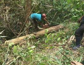 """Tiếng thét đau đớn của rừng xanh Tây Nguyên: """"Nếu đủ yếu tố sẽ khởi tố""""!"""