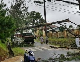 Mưa lớn khiến nhiều cây xanh bị quật đổ, 20 nhà dân bị tốc mái