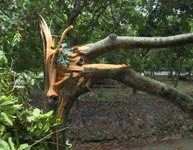 Vĩnh Long: Giông lốc làm tốc mái nhà, gãy đổ nhiều cây xanh