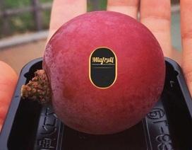 Nho đắt nhất thế giới 11 triệu/chùm, nhà giàu Việt mua lẻ 1 quả ăn thử
