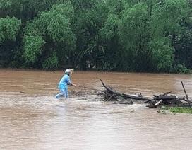 Liều mạng vớt củi giữa dòng nước lũ