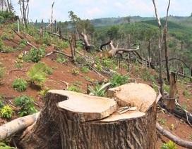 """Hàng trăm hecta rừng """"bốc hơi"""" sau khi doanh nghiệp thuê đất làm dự án"""