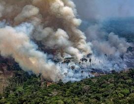 Vì sao rừng Amazon lại quan trọng?