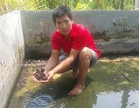 """Nam Định: 8X về quê nuôi loài ếch """"hung dữ"""", kiếm 30 triệu đồng/tháng"""