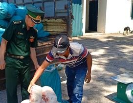 Ngăn chặn hơn 1 tấn thịt lợn đông lạnh qua khu vực biên giới