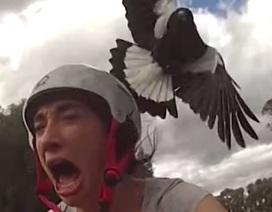 Du khách tử vong vì bị chim trong công viên tấn công