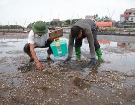 Hà Tĩnh: Ngao chết hàng loạt, người dân mất trắng 40 tỷ đồng