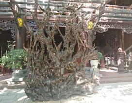 Chiêm ngưỡng bộ rễ gỗ trai tiền tỷ tuyệt đẹp của ông chủ thầu Hà Tĩnh