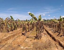 Đại gia nông nghiệp: Người qua thời khó, người nhận tin dữ từ Lào