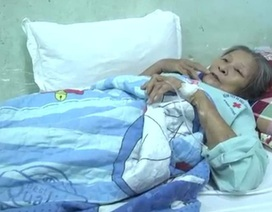 Đồng Nai: 9 người nhập viện cấp cứu vì bị ong vò vẽ đốt