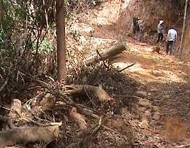 Thừa Thiên Huế: Cán bộ quản lý rừng nghỉ việc để ...chạy xe Grab kiếm sống