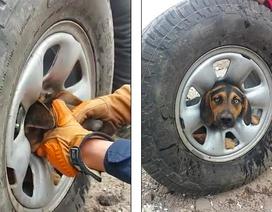 Khẩn cấp giải cứu chú chó bị kẹt đầu trong vành xe