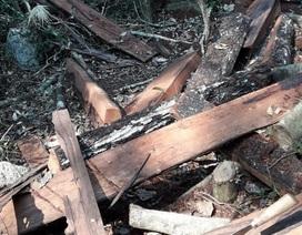 Vụ phá rừng di sản tại Quảng Bình: 7 cán bộ biên phòng bị kỷ luật