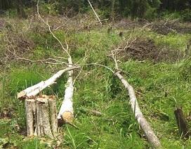 Ban quản lý rừng để mất hơn 500ha rừng, sai phạm gần 1 tỷ đồng