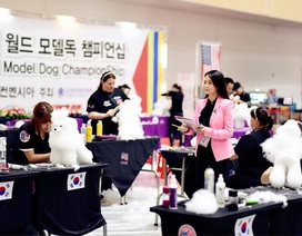Cuộc thi tạo mẫu lông Quốc tế WGA - Cơ hội Phát triển cho nghề Grooming (nghề cắt lông thú cưng)
