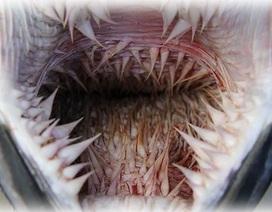 Giải mã chiếc miệng đáng sợ đến khó tin của loài rùa biển?