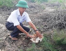 Vụ cả trăm ha rừng dương bị xóa sổ tại Bình Định: Lãnh đạo công ty điện gió nói gì?