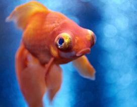 Cá cũng biết cảm thấy… đau giống như con người