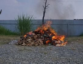 Hà Nội: Tiêu hủy 82 kg sản phẩm từ ngà voi