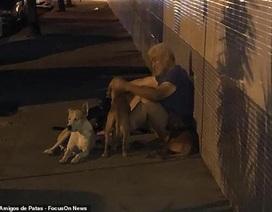 """Clip """"bầy chó đuổi theo xe cứu thương chở ông chủ vô gia cư"""" khiến dân mạng cảm động"""