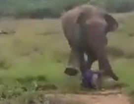 Kinh hãi khoảnh khắc người đàn ông bị voi hoang dã giẫm chết khi tìm cách tiếp cận