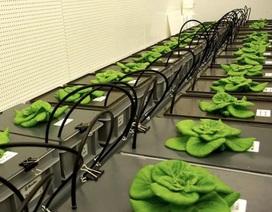 Các phi hành gia có thể trồng đậu trong không gian vào năm 2021