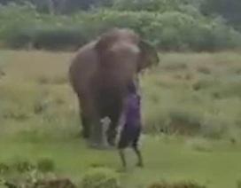 Người đàn ông gặp cái chết thảm khốc vì cố thôi miên voi