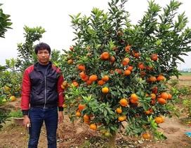 """""""Đút túi"""" hơn 150 triệu đồng mỗi năm từ nghề trồng quất cảnh bán Tết"""